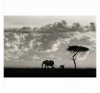 Famille d'éléphant