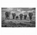 Groupe d'éléphant