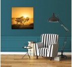 Design Art Photo Sun of Light