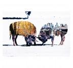 Bison des villes vs bison des champs