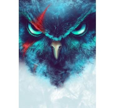 Poster Animal Angry Birds