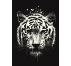 Poster Metal Tigre Nature