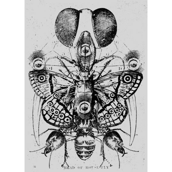 Poster Metallique Eye to the soul