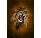 Poster Métal fureur du Lion