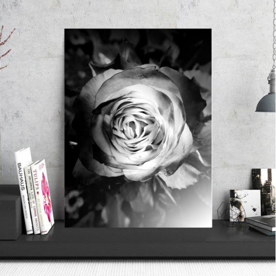 Photo d'Art Aluminium Rose