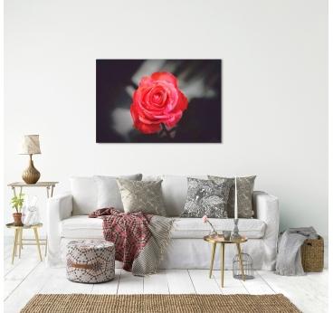 Photo d'Art Solitude Rose