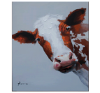 Cow Face Illustration Tableau Abstrait