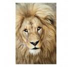Portrait de lion en photo d'art moderne réalisée par notre artiste