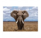 Beautiful elephant on an art photo for a design touch with this aluminium frame