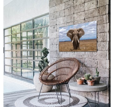 Elephant art photo decoration on aluminium for an unique wall decoration