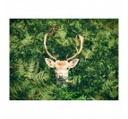 Stag in the green nature on an aluminium art photo
