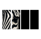 Zebra Eye Poliptyque Design