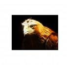 L'Aigle Royal Tableau Animaux