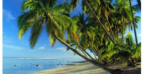 Photo Tropicale