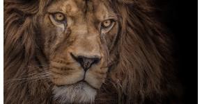 Animal art photo : Modern and nature on aluminium frame