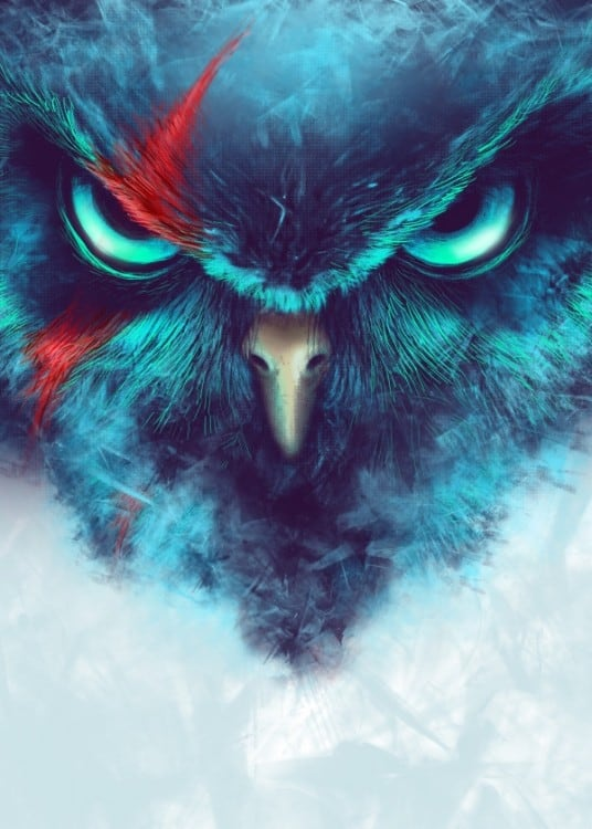Poster métal animal de l'oiseau angry birds