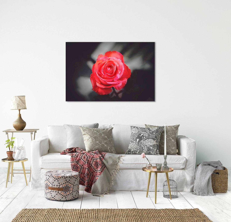 Photo d'art nature d'une rose rouge moderne pour votre décoration murale