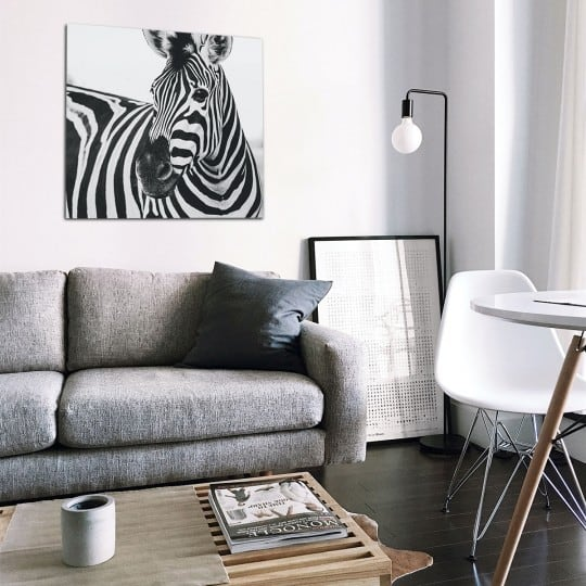 Zebra art photo on aluminium for a modern wall decoration